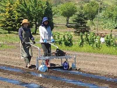 各季節の野菜農作業体験 種まき~管理~収穫まで