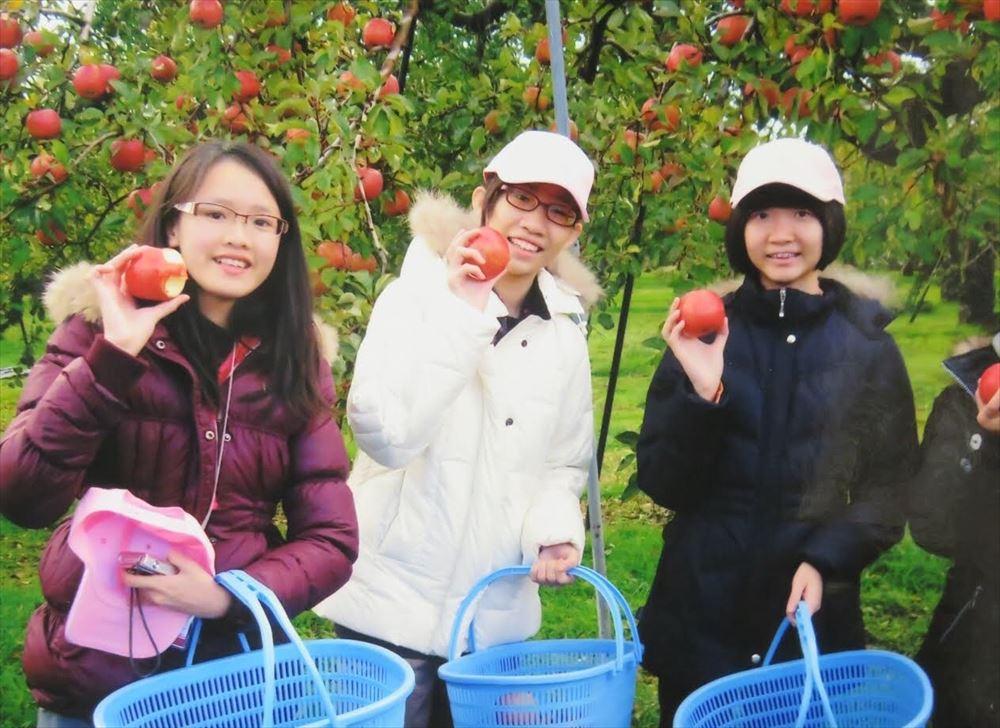 りんご収穫画像